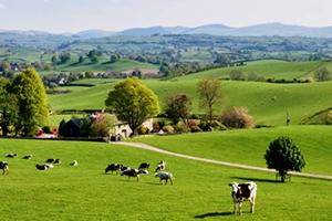 Com o crédito imobiliário rural é possível adquirir Fazenda, Sítio ou Chácaras.